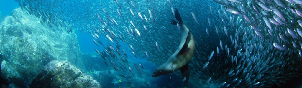 header-programa-marina