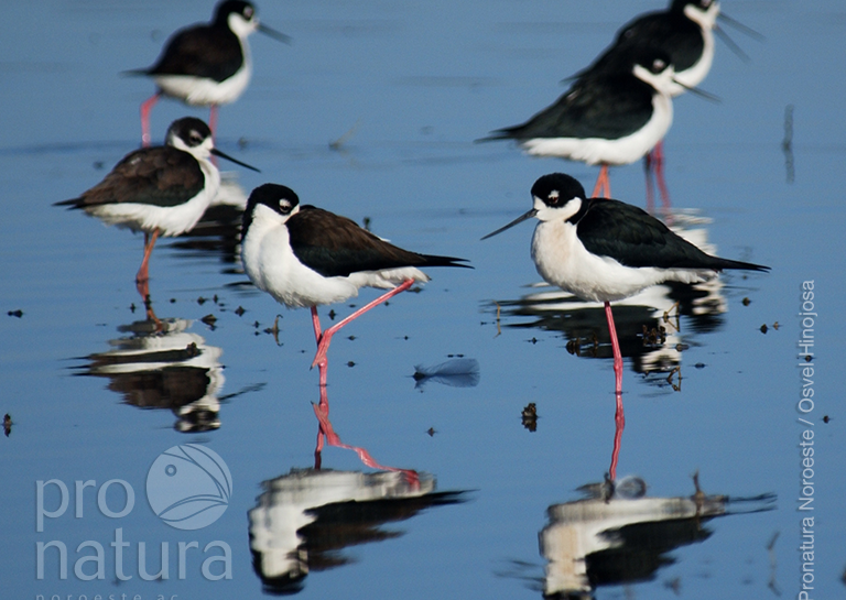 Poblaciones de Aves Acuáticas image