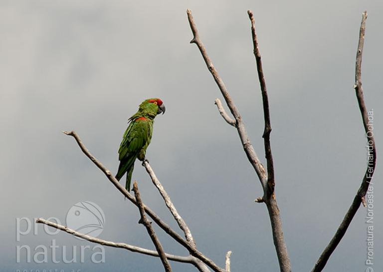 El Programa Nacional de Conservación de Aves de Pronatura es galardonado por su excepcional contribución en la Conservación de Aves image