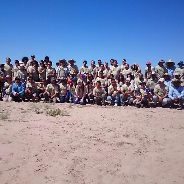 ¡Meta superada! Se plantaron 2,800 árboles en San Luis Río Colorado. ¡Feliz Día del Árbol! #diadelarbol #reforestaSanLuis #yoconservo #pronaturanoroeste