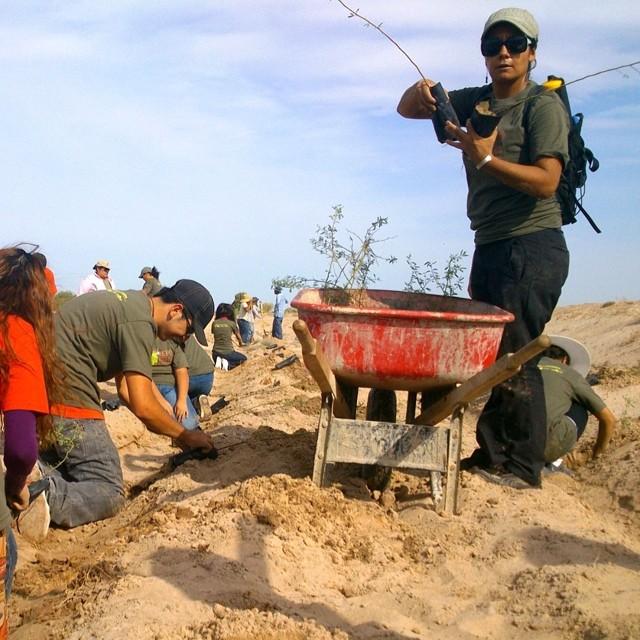 Gracias a la entusiasta participación de la comunidad, la campaña #reforestasanluis ha logrado la plantación de 5,500 árboles nativos.