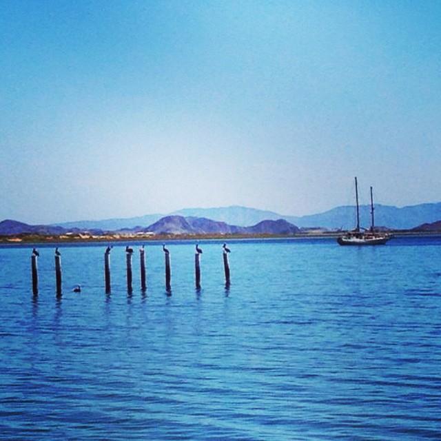 El plan de conservación y manejo de Bahía de los Ángeles ya se publicó. Visitanos en facebook: Pronatura Noroeste y conoce los beneficios de ser un pescador responsable. #pronaturanoroeste #pescasustentable #Facebook