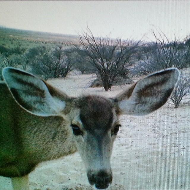 #pronaturanoroeste utiliza cámaras trampa para registrar la presencia de animales en sus áreas de trabajo. #yoconservo