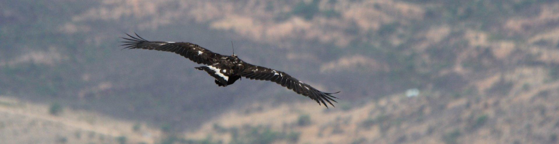 golden eagle u0027s mexican romantic getaways pronatura noroeste