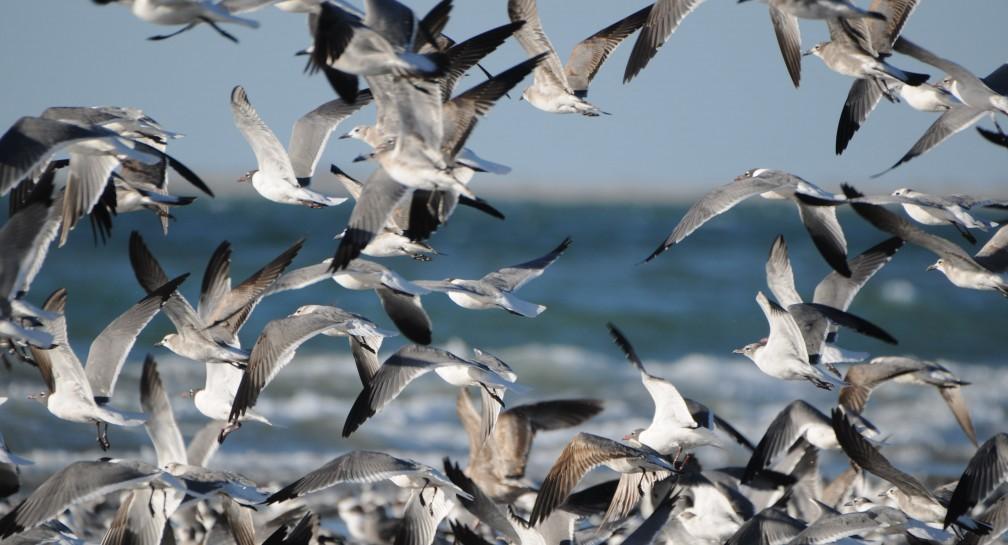 Pronatura Noroeste establece estrategias jurídicas para la conservación de sitios en Sinaloa image