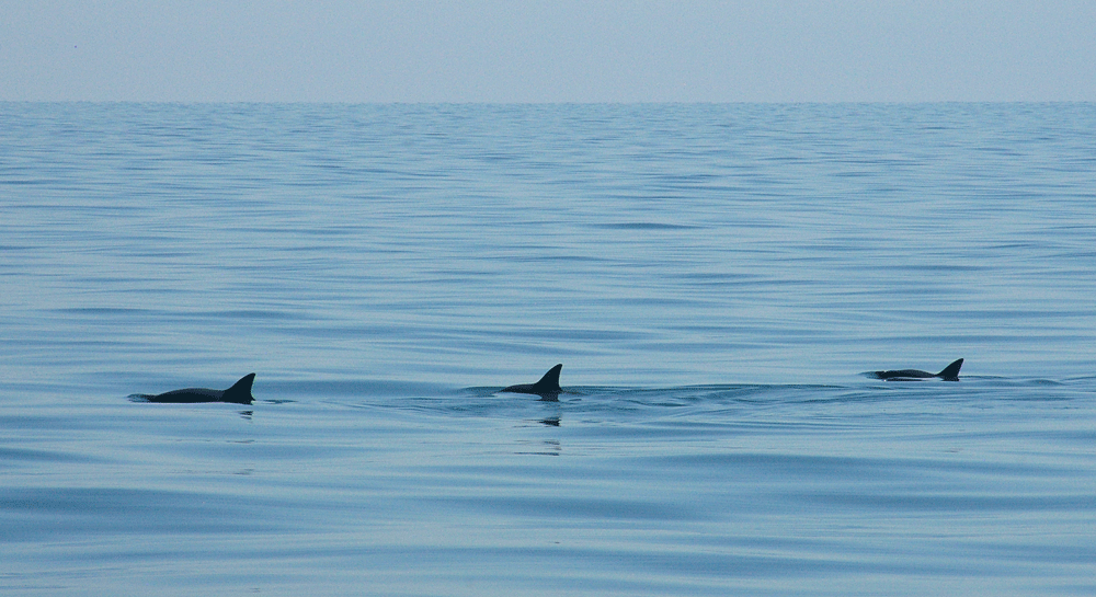 Vaquita conservation in the Upper Gulf of California image