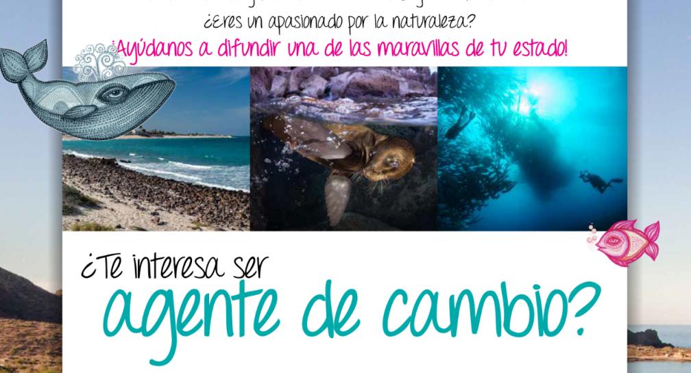 Convocatoria para jóvenes de Baja California Sur image
