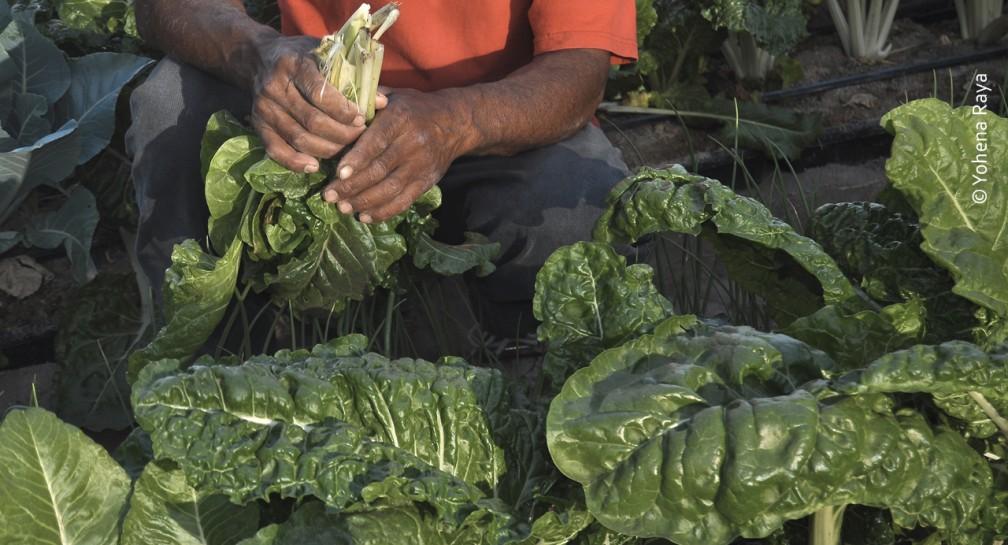 Agricultura de bajo impacto image