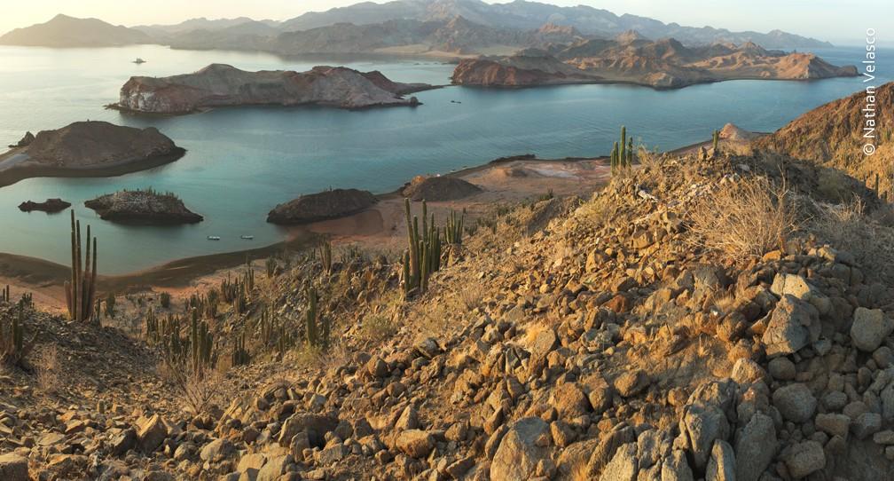 Convocatoria Dirección del Programa de Conservación de Ecosistemas Terrestres image