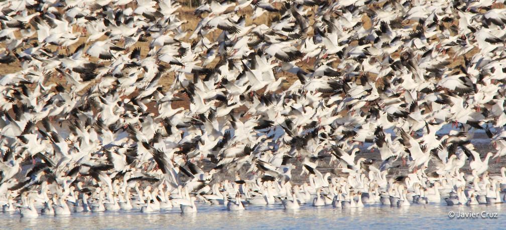 Protegen 900 hectáreas de la Laguna Babícora en Chihuahua image