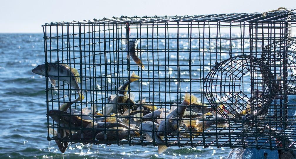 Realizan Proyecto de Mejora Pesquera para la sostenibilidad del Verdillo image