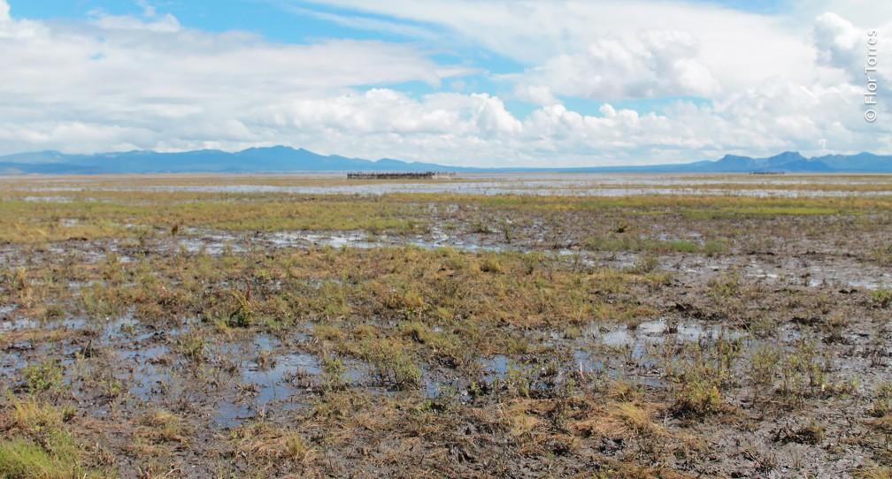 Restauran 600 hectáreas en Laguna Babícora image