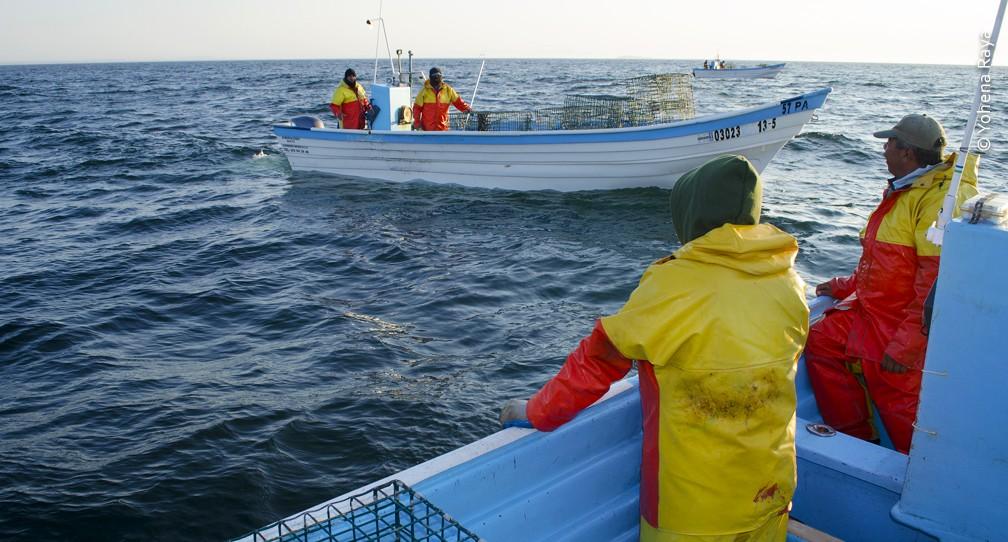 """Pronatura Noroeste promueve los """"FIP"""" como herramientas de vanguardia para la pesca sostenible image"""