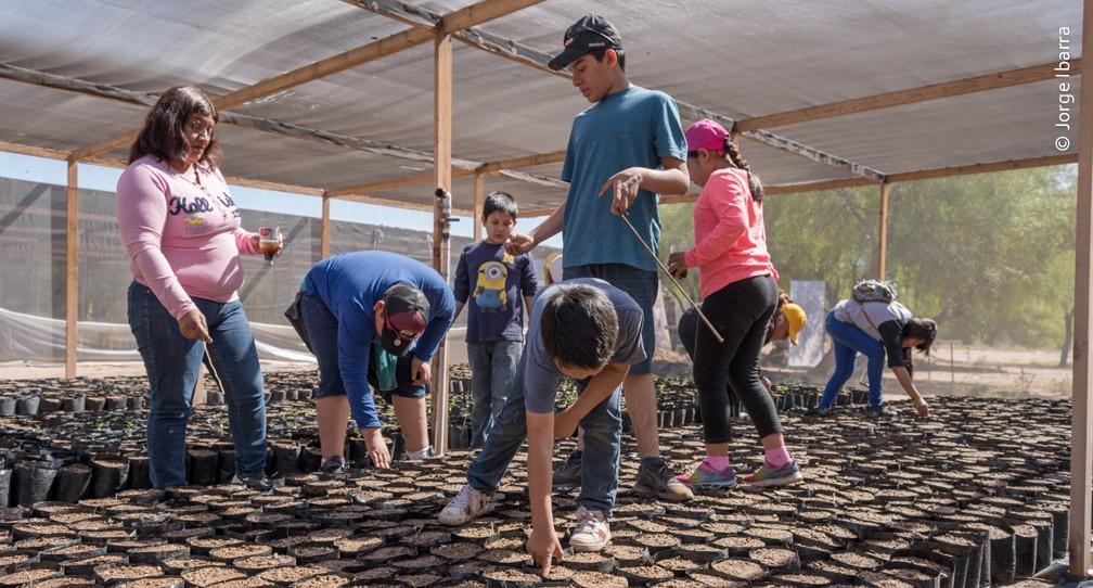 Pronatura Noreste produjo 35 000 árboles nativos para la restauración del Río Colorado image
