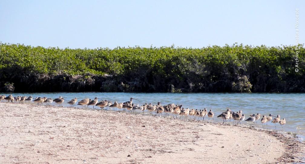 Ayúdanos a crear 50 guardianes para proteger 1,700 hectáreas de manglar en el desierto de Baja California Sur image