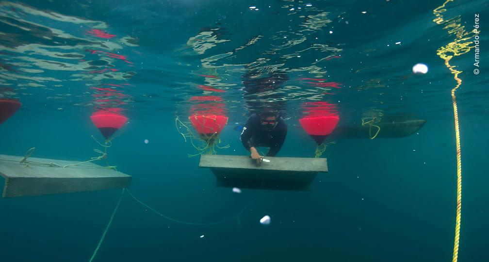 Establecen Zona de No Pesca e instalan casitas cubanas langosteras en Isla Isabel image